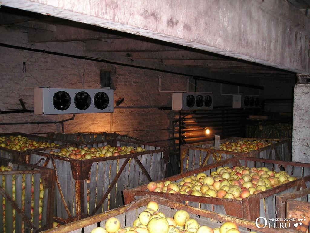 яблоки в подвале