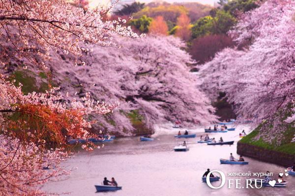 Путешествие в Японию